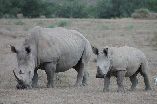 Kwandwe Ecca Lodge: Momma and baby Rhino
