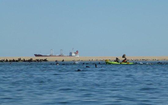 Eco Marine Kayak Tours: kayaks dobles