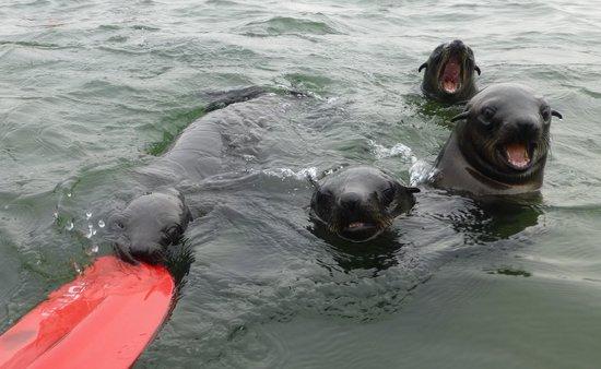 Eco Marine Kayak Tours: asì de cerca estan