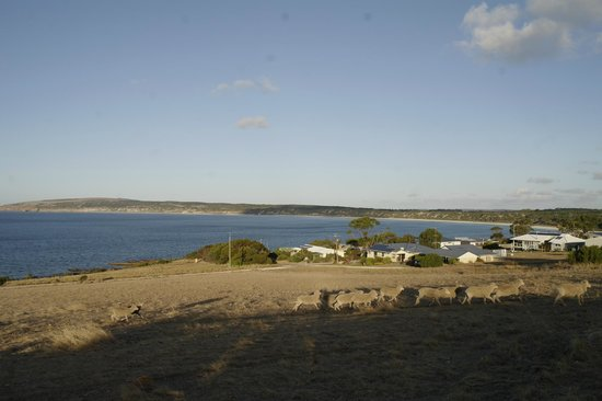 Searenity Holiday Accommodation: Emu Bay with Searenity to middle foreground