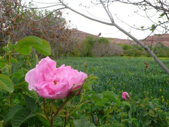 La Perle De M'Goun : roses et jardins