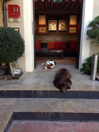 Hotel Montmorency: The hotels dogs - big old soppy fellas - no bother if you're not a dog fan