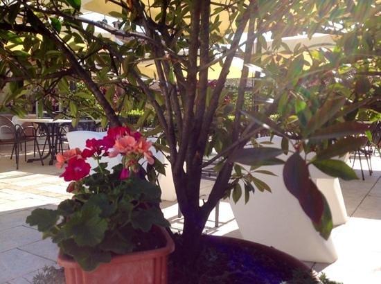 terrazza fiorita - Picture of Hotel Astoria, Torri del Benaco ...