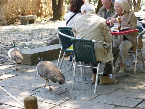 Castelo de Sao Jorge : Peacocks around tables