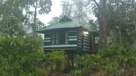 Pachyderm Palace: Treehouse