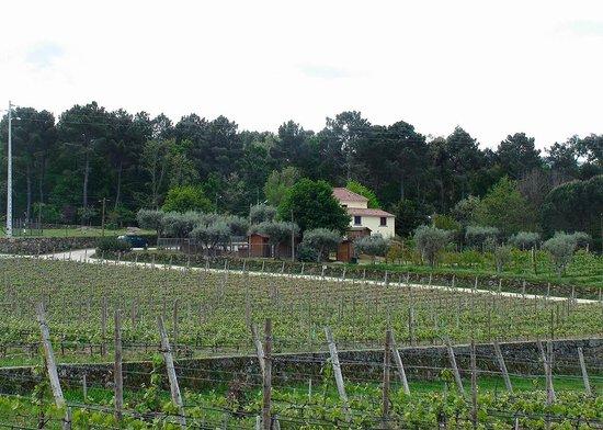 Madre De Agua Hotel Rural: Vista do T2