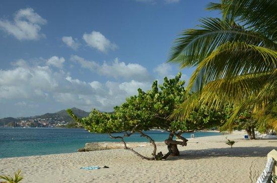 Radisson Grenada Beach Resort: Grand Anse Beach