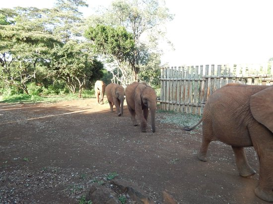 Purdy Arms : Elephants arrive for their supper (not at the hotel)