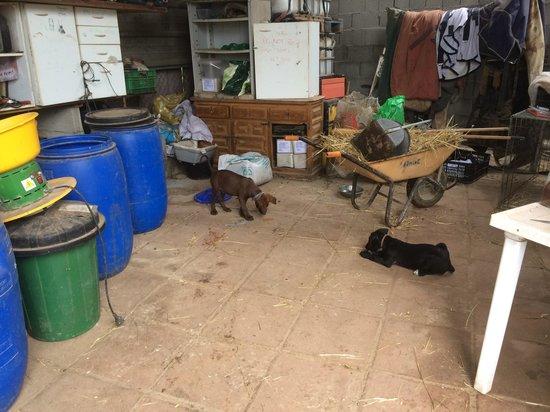 Nerja Donkey Sanctuary : Zwei der ausgesetzen Welpen