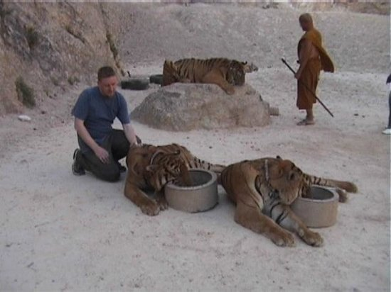 Tiger Temple ( Wat Pa luang Ta Bua): Meeting the Tigers in the quarry.