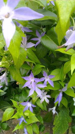 The Plantation Garden: More plants