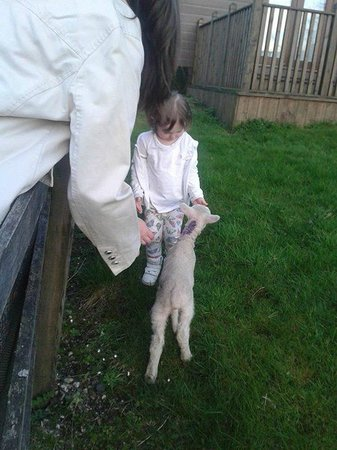 Braeburn Cottage: Meeting a lamb at Easter