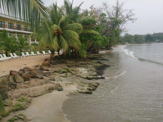 Playa Tortuga Hotel & Beach Resort : Playa dentro del hotel