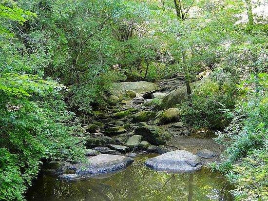 Pisgah Covered Bridge: creek along trail