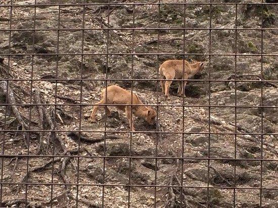 Veszprem Zoo : Animals