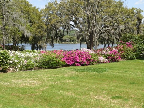 Inn at Middleton Place : Azaleas, Spanish Moss, and the Ashley River in the background