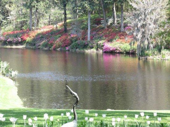 Inn at Middleton Place : Azaleas at the pond