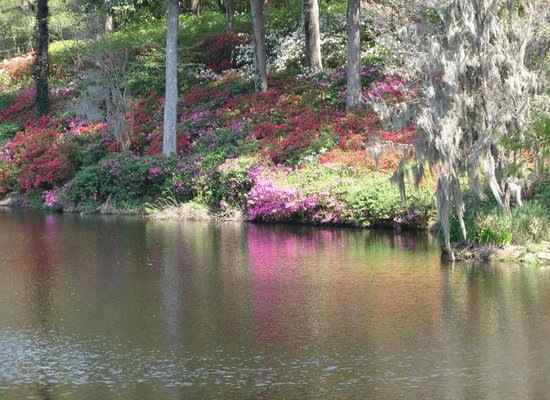Inn at Middleton Place: Azaleas reflecting off the pond