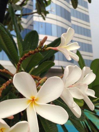 Holiday Inn Cochin : Holiday Inn Kochi - Shahin