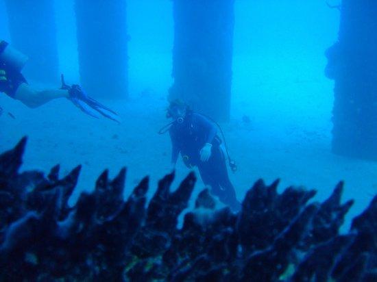 N2theBlue Scuba Diving: The Pier