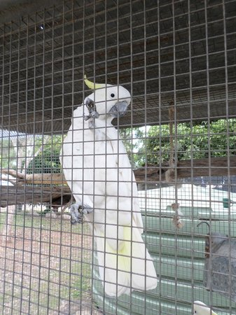 Granite Gorge Nature Park: Beware the cockatoo bites!