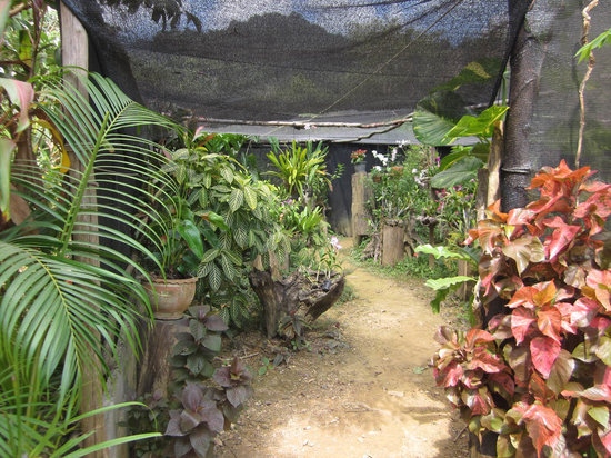 Butterfly Complex Center: Our beautiful garden