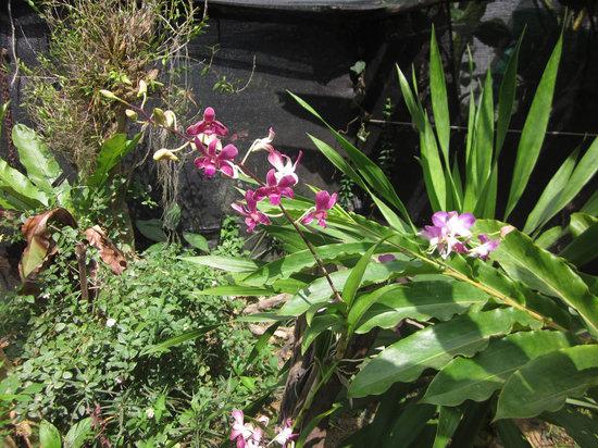 Butterfly Complex Center: Ochids in our garden