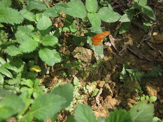 Butterfly Complex Center: Butterflies in our garden