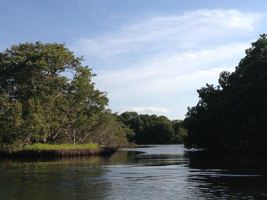 Laguna de la Restinga: Vista del paseo
