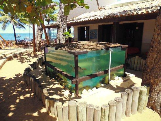 Forte Beach: 12