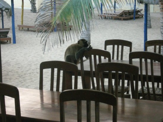 Hotel Coco beach: grappig om te zien