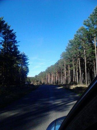 Camping Urbion : Esta es la carreterita hacia el camping :)