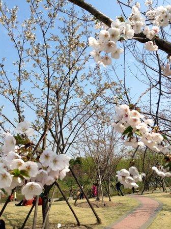 Gucun Garden : Beautiful flowers