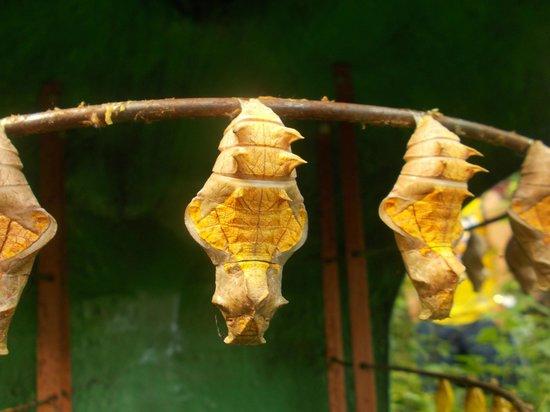 Entopia: Yellow Coccon