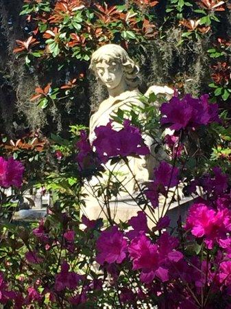 Bonaventure Cemetery: azaleas in bloom