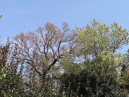 Villa Carlotta Hotel : alberi del parco