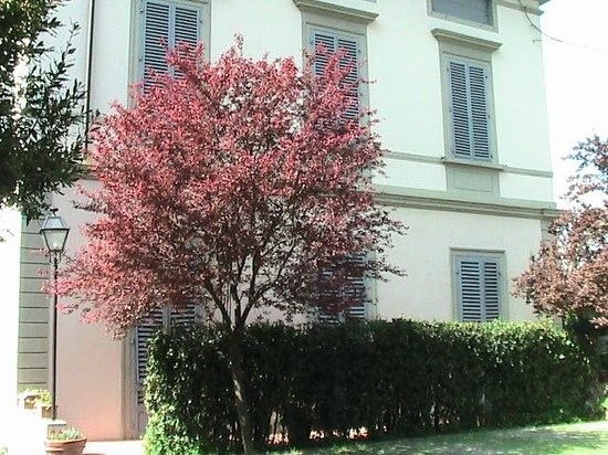 Villa Carlotta Hotel : albero del parco e facciata della villa