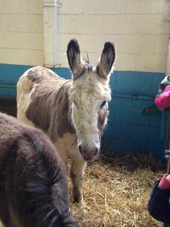 The Donkey Sanctuary: Donkey