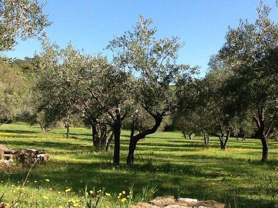 La Buissonniere: Jardin