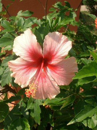 Bo Phut Resort & Spa: Das ganze Gelände ist voller Blumen