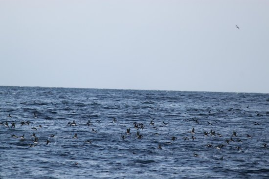 North Sailing: Spotted the puffins