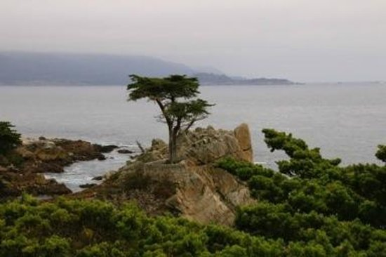 17-Mile Drive: Lonesome Pine