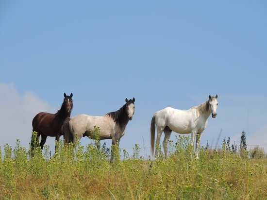 Bokpoort Cowboy Ranch: Some of the beauties there