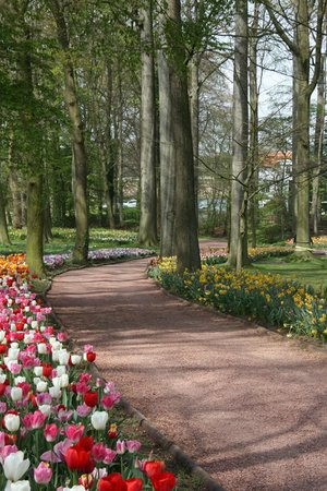 Floralia - Spring Flower Show: Forest Path