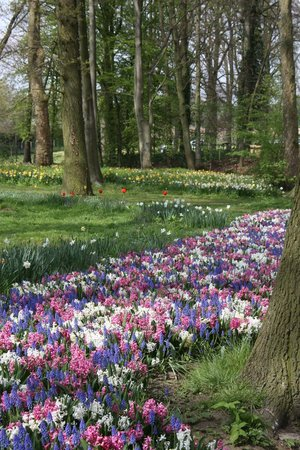 Floralia - Spring Flower Show: Magical Pathway
