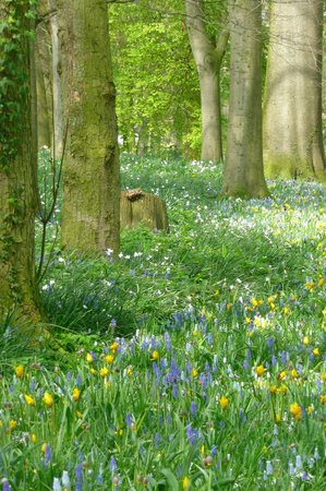 Floralia - Spring Flower Show: Beauty in the Woods