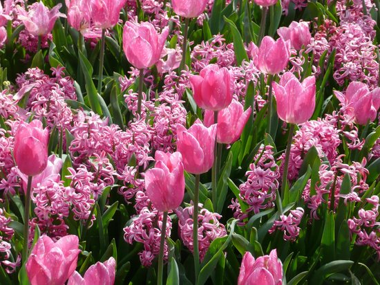 Floralia - Spring Flower Show: The Power of Pink