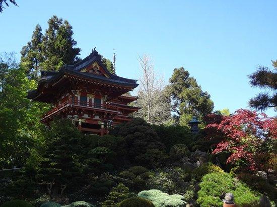 Japanese Tea Garden: Bela paisagem!