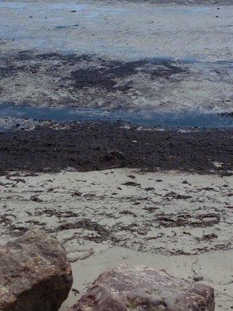 Club Med Djerba la Douce : La belle plage