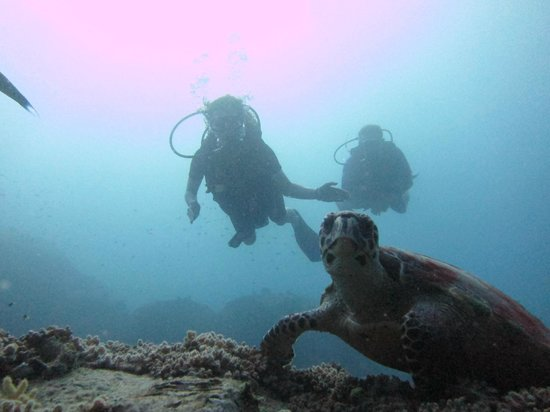 Calypso Diving: Sabrina und Günter + Schildi
